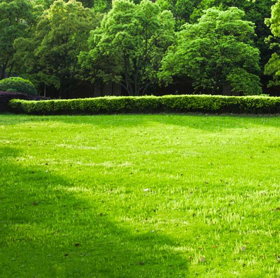 I Giardini di Maggi: prati e tappeti erbosi