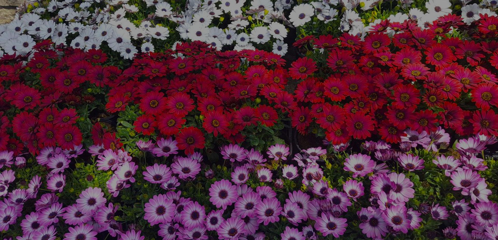 I Giardini di Maggi fiori