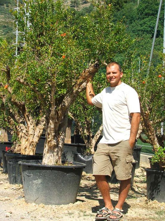 I Giardini di Maggi: punica granatum