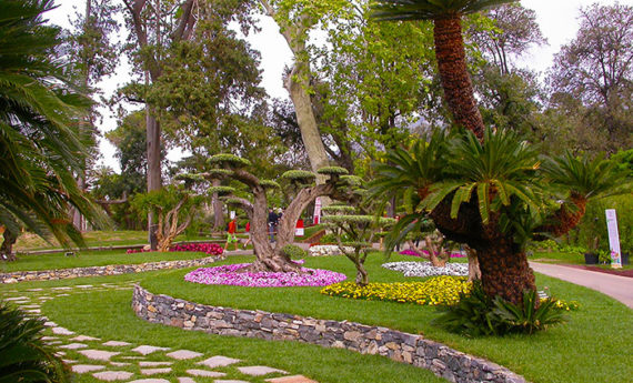 I Giardini di Maggi: cycas di 400 anni