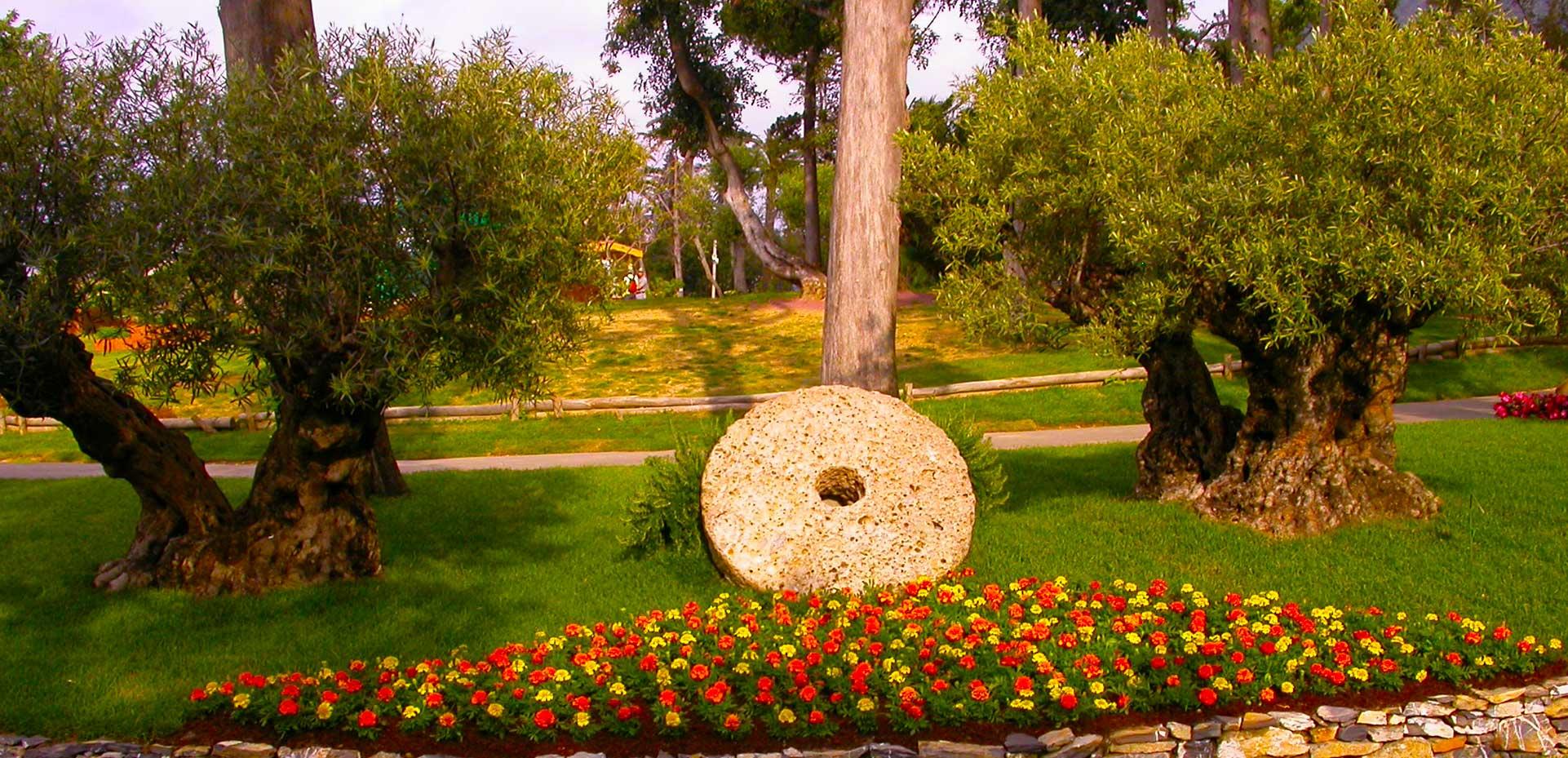 I Giardini di Maggi: olivi secolari