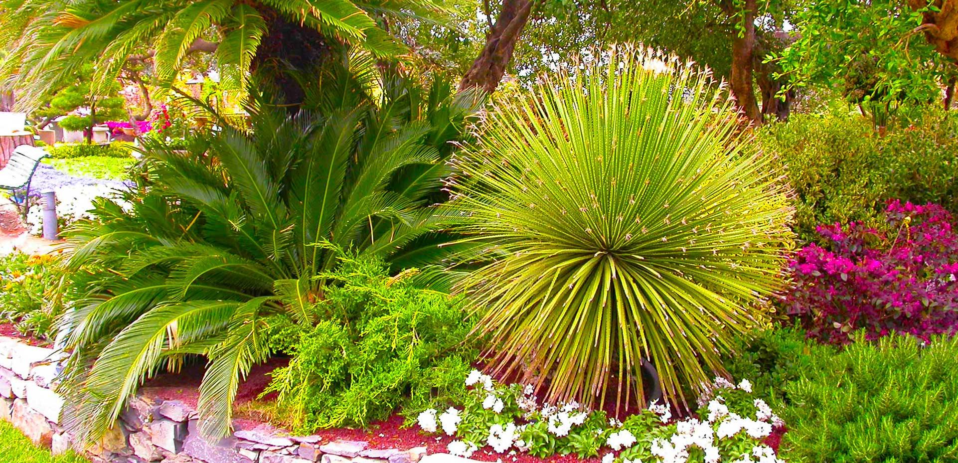 I Giardini di Maggi: palme